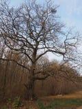 树的大根 库存照片