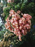 树的开花在XI的`,中国的 免版税库存照片