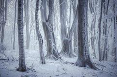 树的弗罗斯特在有雾的幻想森林里在冬天 免版税库存照片