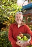 从树的成熟人采摘苹果在庭院里 库存照片