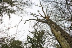 树的技巧射击  免版税库存照片