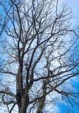 树的抽象样式在一个森林里在一个冷的冬日 免版税库存照片