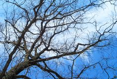 树的抽象样式在一个森林里在一个冷的冬日 库存照片