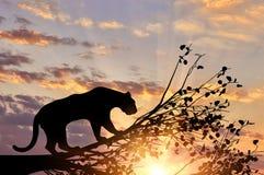 从树的捷豹汽车动物 图库摄影