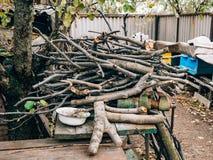 树的日志 被锯的木头 库存图片