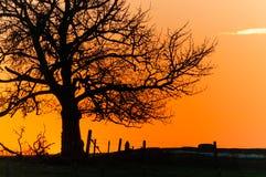 树的日落剪影 免版税图库摄影