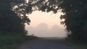 树的曲拱窗口 雾在黎明 股票录像