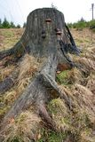 树的树干 免版税库存图片