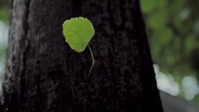 树的树干 股票视频