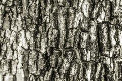 树的样式 图库摄影