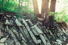 树的根发芽了入岩石和石头反对明亮的太阳的背景 免版税库存图片