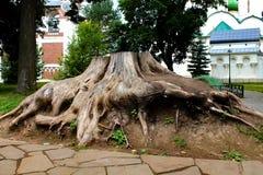 树的根 免版税图库摄影
