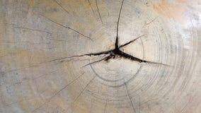 树的横断面 库存照片