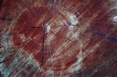 树的横断面 免版税库存图片