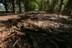 树的死的分支和枝杈在地面上的在美丽的su 免版税库存照片