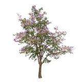 树的汇集与在白色背景隔绝的桃红色花的 免版税库存图片
