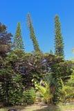 树的混合在杉木小岛,新喀里多尼亚,南太平洋的 库存图片