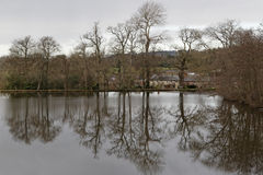 树的湖反射在冬天 免版税图库摄影