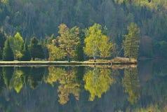树的湖反射在早期的春天 免版税库存图片