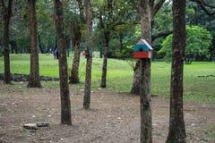 树的灰鼠房子在公园 库存图片