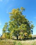 树的看法 免版税库存照片
