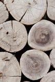 树的短剖面图象 库存照片