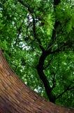 树的砖墙和分支 库存照片