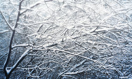 树的积雪的早午餐 免版税库存图片