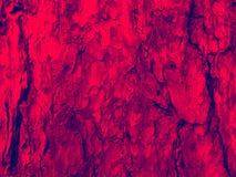 树的红色吠声 图库摄影