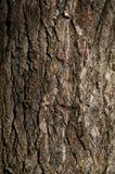 从树的纹理的背景 免版税库存图片
