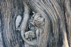 树的纹理 库存照片