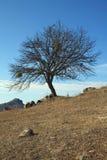 树的美丽的景色 免版税库存图片