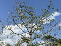树的美好的上面,观看从底部到上面 免版税库存照片