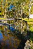 树的美好的反射在一个水坑的在一个城市公园在清早 免版税库存照片
