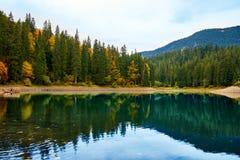 树的美好的反射在山森林湖 免版税库存照片