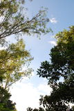树的美好的本质在Chacheongsao 免版税图库摄影