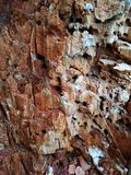 树的腐烂的树干 库存图片