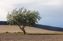 树的艺术图象在沙漠。 免版税库存图片