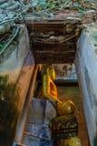 树的菩萨, Samutsongkram在泰国 免版税库存照片