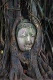 树的菩萨 库存图片