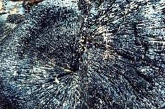 树的被烧焦的树干,黑木炭木头 图库摄影