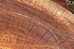树的这个中心 库存照片