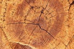 树的这个中心 免版税库存照片