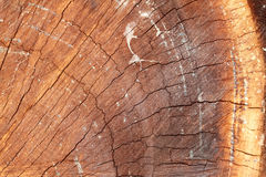 树的这个中心 免版税图库摄影