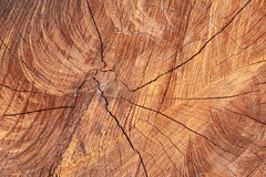 树的这个中心 免版税库存图片