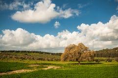 在谷的偏僻的树 免版税库存图片