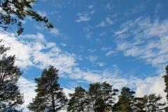 树的部分构筑的蓝天和白色云彩 免版税库存照片