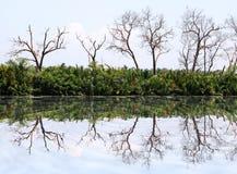 树的镜象反射沿运河的 免版税库存图片