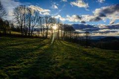 树的长的阴影在草地的 库存图片