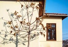 树的阴影在房子的墙壁的 图库摄影